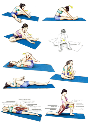 Какие упражнения помогут растянуться