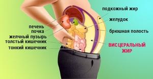 Висцеральный жир - как убрать