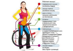 Тренировка мышц на велотренажере