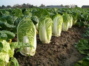 Полезные овощи для организма