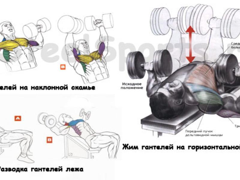 Упражнения с гантелями дома для начинающих мужчин